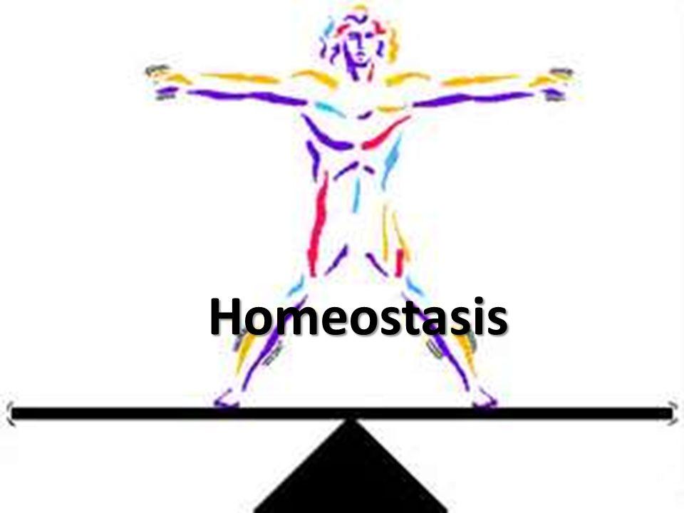 Spiritual Homeostasis – rusty tugman
